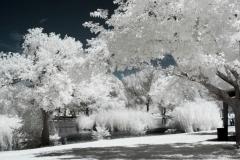 Toolie Springs