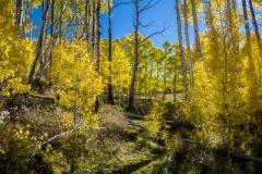 Bolder Mountain Fall