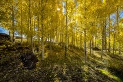 Boulder Mountain Fall