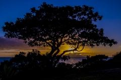 Tree Sihlouete