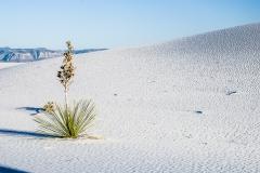 White Sands